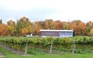 Taxing times for Ontario's wine industry