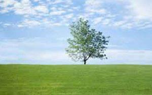 Green Action versus Green Talk