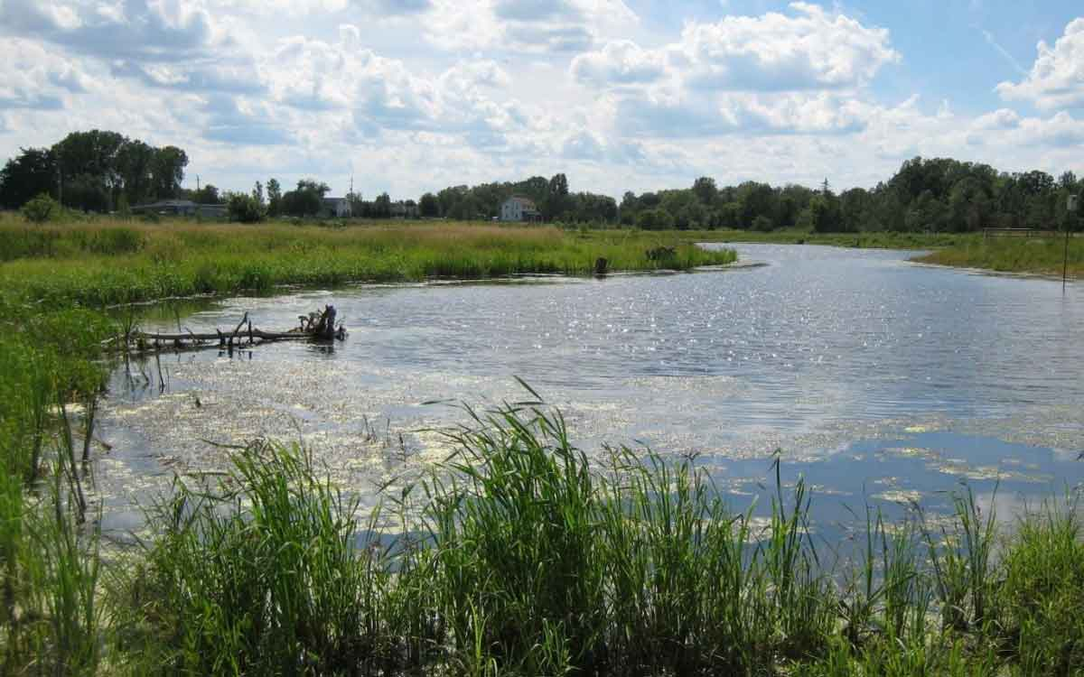 npca wetland